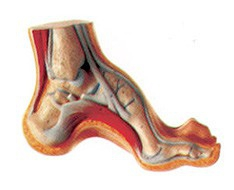 Teaching Materials- Chiropody